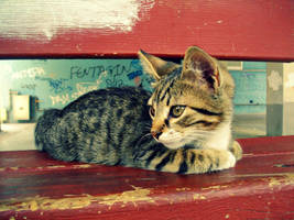 Little Mello. by Catist