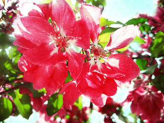summer blossom  2 by ta1setsu