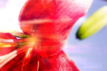 lily by ta1setsu