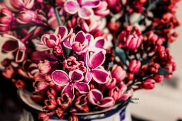 lilac by ta1setsu