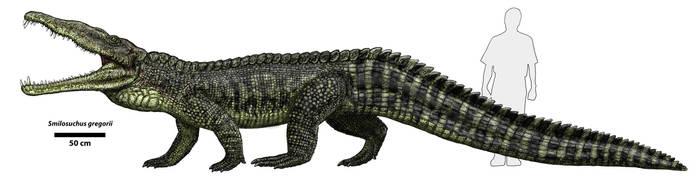 Smilosuchus by Typothorax