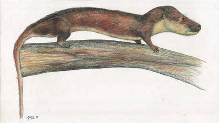 Oligokyphus by Typothorax