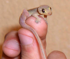 dog-gecko by GreenIguana