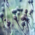 cold plants by Orwald