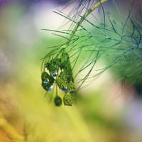cluster of drops by Orwald