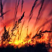 burning sky by Orwald