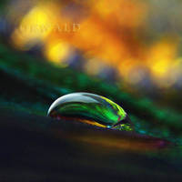mysterious drop by Orwald