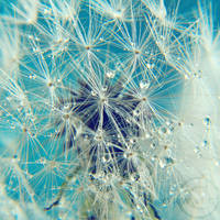 fragil web by Orwald