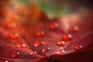 fiery tears by Orwald
