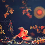 FISH by Orwald