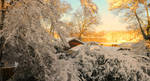 01- Golden Snow by JoeCorreia