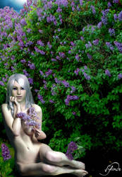 Lilacs by Sylinde