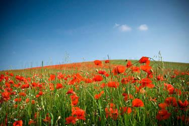 Poppy Field I by 2-m