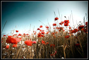 Poppy Field II by 2-m