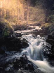 Spring delight by streamweb