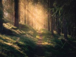 The path of light by streamweb