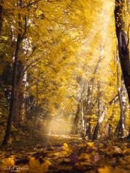Golden autumn by streamweb