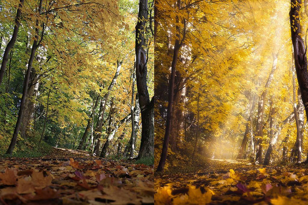 Goldenglow by streamweb