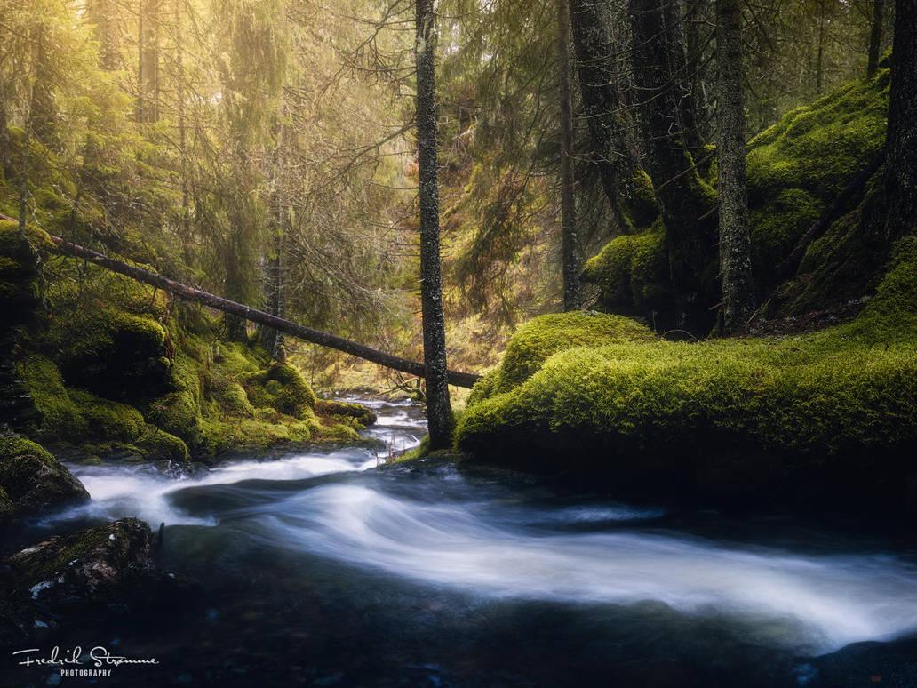 November lush by streamweb