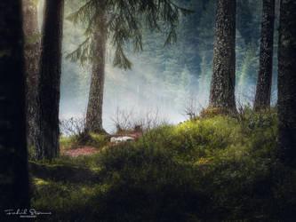 The misty forest by streamweb