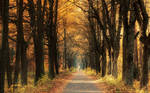 Golden Road by shade-pl