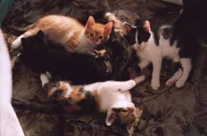 Kitten by rehael