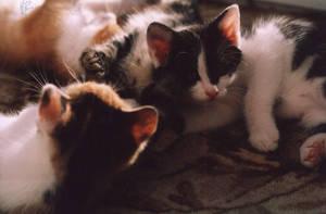 Sleeping Kitten by rehael