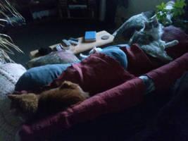 Why My Furniture Wears Blankets 2 by kittenwylde