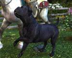 Chapter 3: Calla-hound by kittenwylde