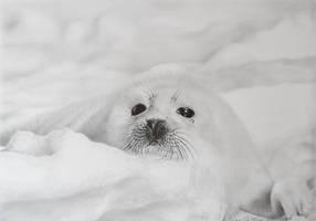 baby seal by momojj