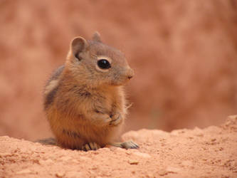 Chipmunk Being Cute by ShroudedMist97