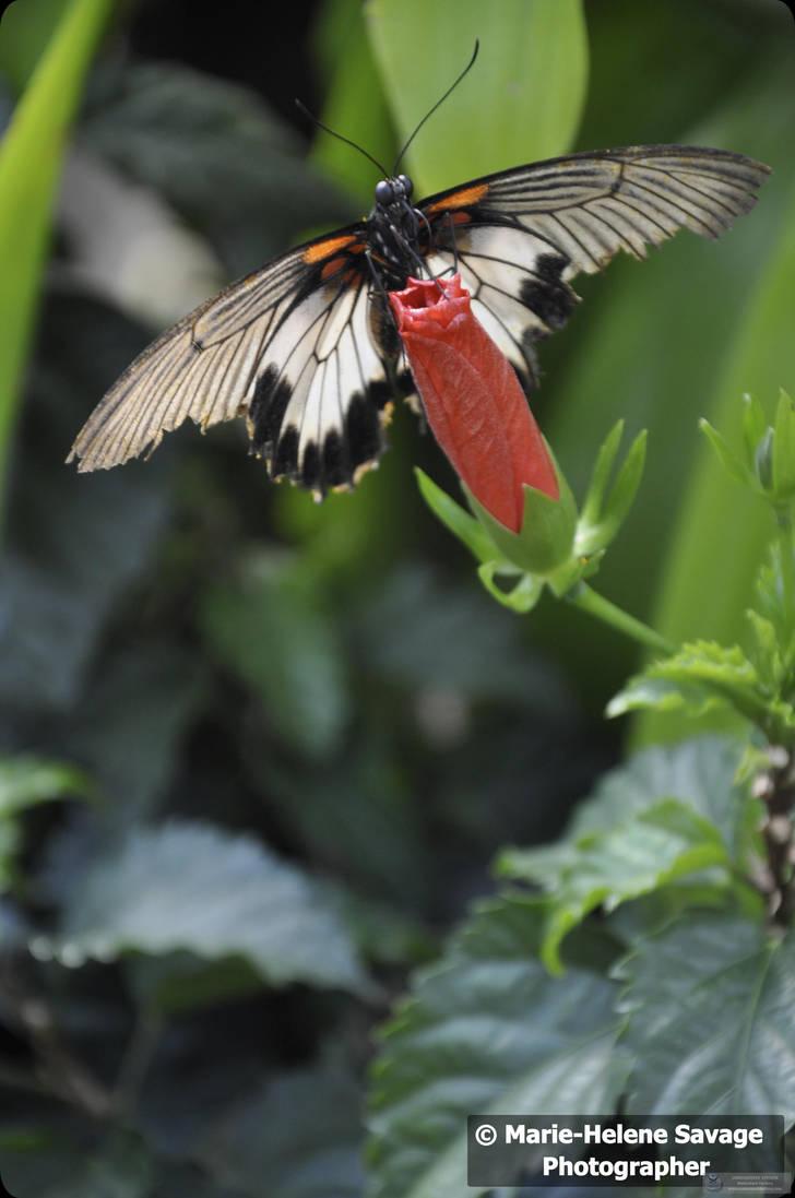Butterfly Jardin Hamel By Music4ever13 On Deviantart