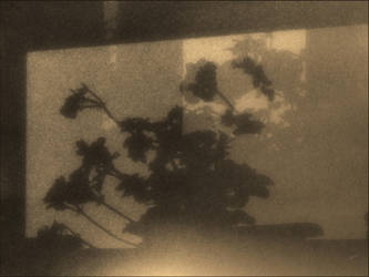 cm_69 weeping shadows by drnda42