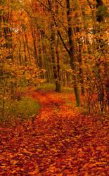 Another photo of autumn by ZielinskiMaciej