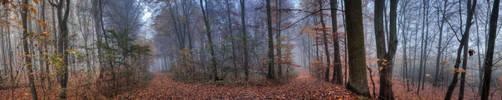 Forestscape by ZielinskiMaciej