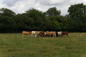 Cowspiracy by wafitz