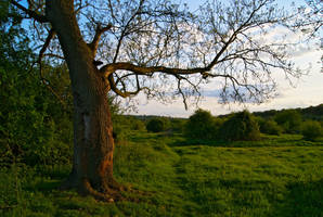 A Stretching Tree by wafitz