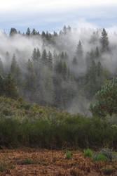 378 - Northern California by absurdus