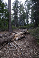 383 - Lake Tahoe by absurdus