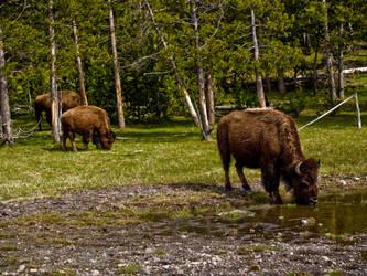 Beasts of the Field by DustwaveStock