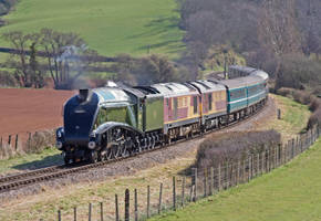 Bittern on the Tour by GB-Railways