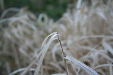 Grass Blade by Dierdra83