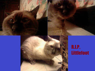 My dead kitty by supahcomicbro