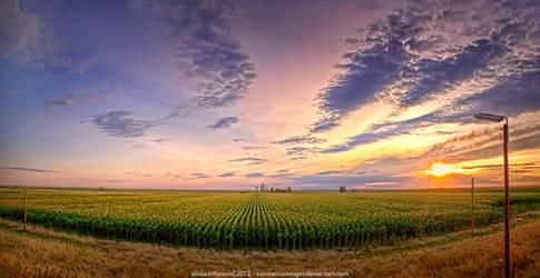 _corn fields_ by SorrowScavenger