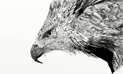 Eagle by Wolfhawk
