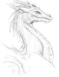sketchy dragon bust by hibbary