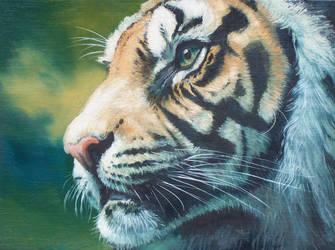 tiger by hibbary