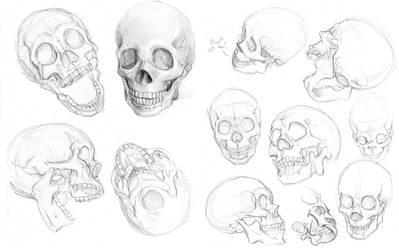 Skulls by hibbary