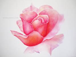 Primrose by Susaleena