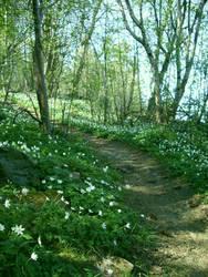 Spring Path 3 by NaviStock